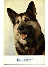 German Shepherd Breed Pet Dog-Close up Animal Vintage Postcard-1957