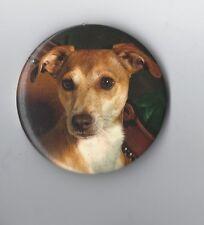 Smooth Hair Terrier Fridge Magnet - NEW - MUST L@@K! GREAT Stocking Filler
