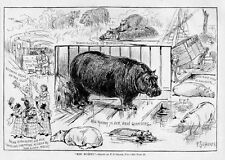 F. S. Church, Hippopotamus, New York Central Park, Miss Murphy The Hippopotamus