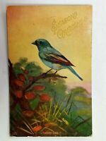 Vintage Postcard 1909 Season Greetings Indigo Bird on Limb