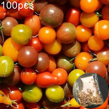 100Pcs Cherry Tomato Seeds Delicious Fruit Nutritious Vegetable Garden Plant