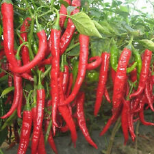 50Pcs Rare Giant Spices Red Spicy Chili Pepper Seeds Vegetable Plant