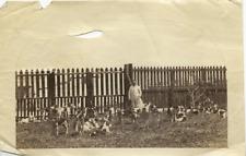 France, chiens de chasse  Vintage albumen print Tirage albuminé  11x16  Ci