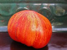 Feuerwerk / Firework Heirloom Tomato : 25 Seeds