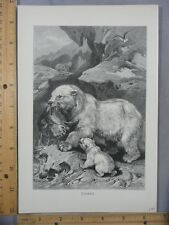 Rare Antique Original VTG Polar Bear Eisbar Baby Cub Fish Illustration Art Print