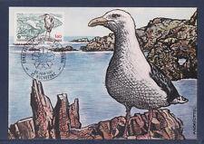 carte  1er jour   espace littoral  oiseau      1981