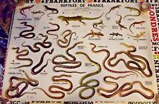 Affiche Scolaire Poster Carte Lézard serpent Gecko Couleuvre Vipère aspic Algire