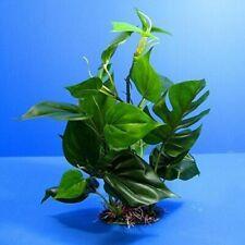 Digiflex  Plastic Decorative Aquarium  Plants (30 cm)