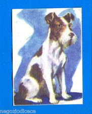 ANIMALI - Lampo 1964 - Figurina-Sticker n. 54 - FOX TERRIER -New
