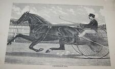 ORG LATE 1800'S BOOKPLATE PRINT-RACE HORSE W/DRIVER-THORNDALE (A13)