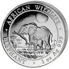 2011 1 Oz Silver 100 Shillings Somalian AFRICAN ELEPHANT Coin.