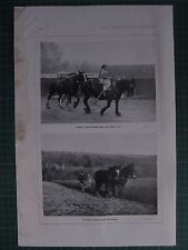 1917 WWI WW1 PRINT ~ TAKING IN HORSES AFTER DAYS WORK FARMING ~ PLOUGHING