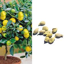 LN_ 10× LEMON TREE SEEDS INDOOR BALCONY OUTDOOR GARDEN FRUIT POTTED PLANT NIC