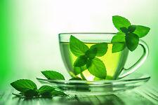 Eucalyptus Spearmint by Peak® Type Soap/Candle Making Fragrance Oil 1-16 Ounce