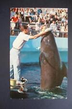"*558) Rancho Palos CA ~ Marineland Of The Pacific ~ Female Pilot Whale ""Bubbles"""