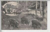 (72750) AK Gruß aus Messel, Wildpark u. Gasthaus Germann, 1912