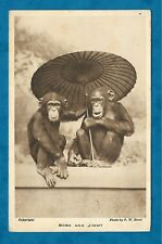 1930s LONDON ZOO PC BOBO AND JIMMY CHIMPANZEES WITH PARASOL