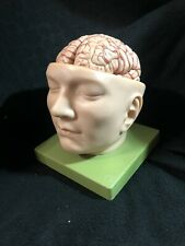 Somso Head Base with Brain Model, 9 Parts Anatomical Model