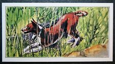 BASENJI   Silent African Hunting Dog    Superb Small Colour Card