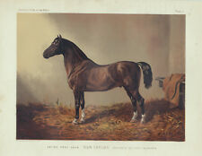"""PONY HACK """" DON CARLOS"""" IN STABLE ANTIQUE HORSE ART PRINT LITHOGRAPH 1873"""