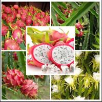 500 PCS Seeds Dragon Pitaya Tree Fruit Plants Tropical Bonsai Garden Rare 2021 G