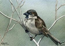 """HOUSE SPARROW"" Bird Giclee 5 x 7 Art Print on W/C Paper Signed by Artist DJR"