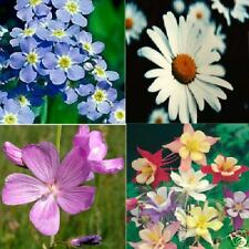 Gift Pack 4 flower seed packets, daisy.Free Shipping!