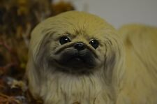 Pekingese Puppy sitting on a real stone with Sankyo music box - Mint -Nice- 3x6""