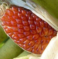 Strawberry Popcorn 50 seeds Showy* Unusual * Ornamental CombSH G26