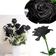 100Pcs Black Rose Seeds Beautiful Flower Seeds