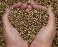 Whole Hemp Seeds in Shell - Birdseed or Wildlife - Choose Size!