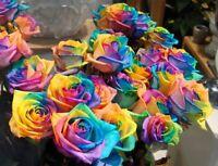 Regenbogen Rose / Einhornrose / Bunte Rose / ca. 50 Samen / Geschenk