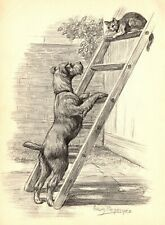 1950s Antique Irish Terrier Dog Print Wall Art Birthday Gift for Dog Lover 3989c