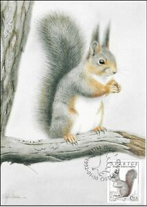 Squirrel World Wildlife Rodent Sweden Mint Maxi FDC Card 1992