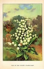 """1926 Vintage GARDEN FLOWER """"LILY OF THE VALLEY"""" GORGEOUS COLOR Art Lithograph"""