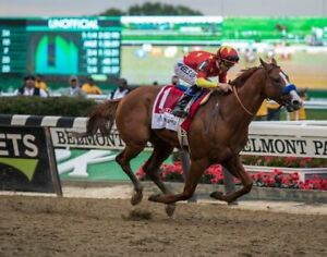 JUSTIFY 8X10 PHOTO HORSE RACING PICTURE JOCKEY BELMONT STAKES