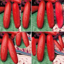30 Stück Rot Frucht Gurke Samen Gemüse Saatgut Gurken Samen Garten Deko
