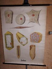 1 x Zellen, Lehrkarte/ Rollkarte (1443) gebraucht