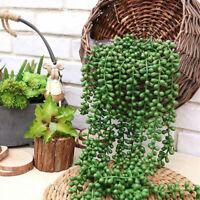 2 Stk. Künstliche Hängepflanzen Simulation Perlenkette Blumendeko Sukkulenten