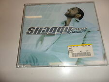 CD Shaggy-Angel