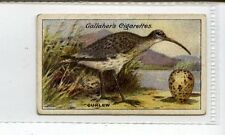 (Jc4141-100)  GALLAHER,BIRDS,NESTS & EGGS SERIES,CURLEW,1919,#33