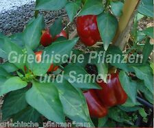 Ungarische Mini Paprika MINIATURE ROT Chili Gewürzpaprika SÜSS 10 frische Samen