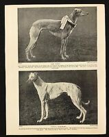 1934 Dog Print / Bookplate - GREYHOUND, 2 named Waterloo Cup Winners, Champions
