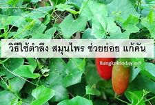 Best Thailand Coccinia Grandis 100 Seeds, Ivy Gourd Free Delivery