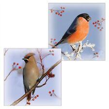 Gps luxe cartes de noël-jaseur boréal & bouvreuil hiver oiseaux (10 cartes)