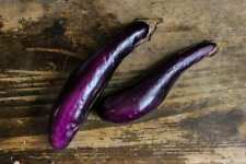 Purple Chinese Eggplant 100 PCS Bonsai Healthy Home Exotic Plant Vegetables