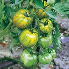 50 GREEN ZEBRA TOMATO SEEDS HEIRLOOM NON GMO FRESH US SELLER