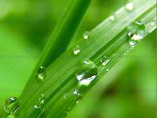 NATURE GRASS BLADE WATER DROP COOL BEAUTIFUL POSTER ART PRINT BB122B
