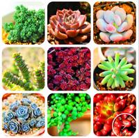 100 PCS Seeds 99 Kinds Rare Succulents Lithops Pseudotruncatella Bonsai Plants N