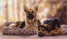 "GERMAN SHEPHERD DOG GSD ALSATIAN FINE ART LIMITED EDITION PRINT - ""Slumber Down"""